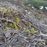 Brzké jaro – stoupající Kapha