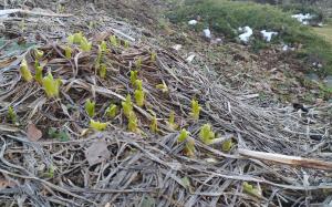 Brzké jaro Kapha období