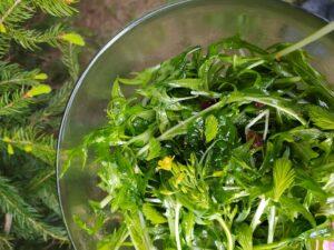 Smrkové výhonky - zelený salát